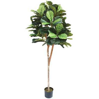 Ball Silk Fiddle Leaf Fig Tree in Pot - Wayfair