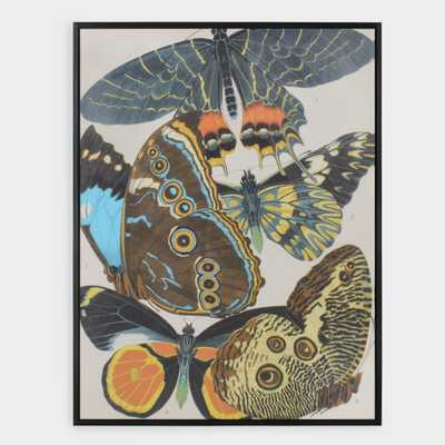 Papillon's Plate II By E.A. Séguy Framed Canvas Wall Art by World Market - World Market/Cost Plus