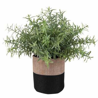 Succulent In Two-Tone Jute Pot - Wayfair