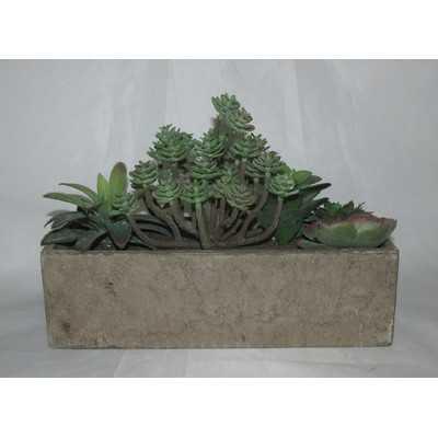 Succulent Plant in Planter - Wayfair