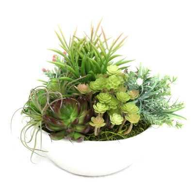 Table Top Succulent in Planter - Wayfair
