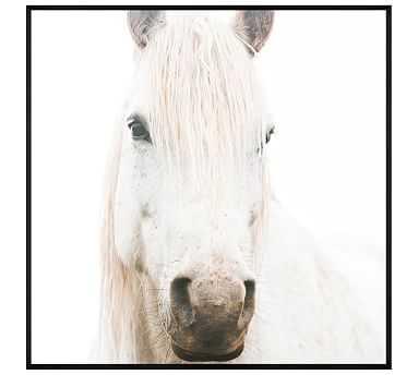 "White on White Horse by Jennifer Meyers, 48 x 48"", Wood Gallery, Black, No Mat - Pottery Barn"