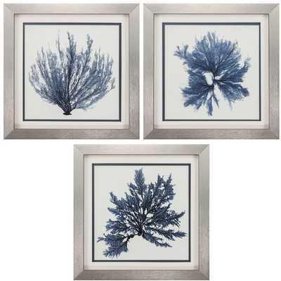Coastal Seaweed 3 Piece Framed Painting Print Set - Birch Lane