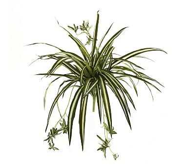 Faux Spider Plant Bush, Set Of 4 - Pottery Barn