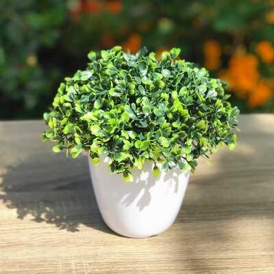 Artificial Boxwood Plant in Decorative Vase - Wayfair