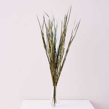 Dried Wild Grass - West Elm