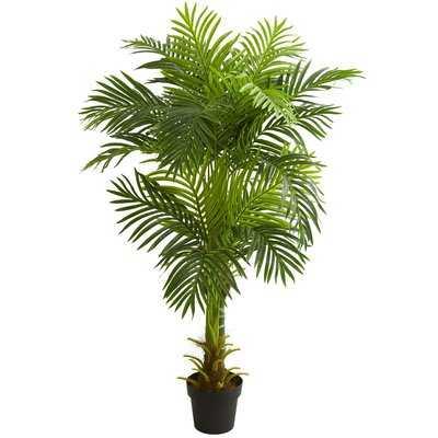Double Stalk Hawaii Floor Palm Tree in Planter - Wayfair