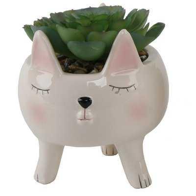 Cute Girl Cat Desktop Succulent Plant in Pot - Wayfair