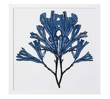 "Framed Coral Print #4, Indigo, 20 x 20"" - Pottery Barn"