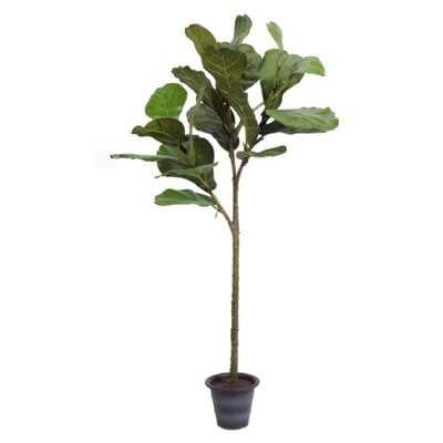 Fiddle Leaf Fig Tree in Planter - Wayfair
