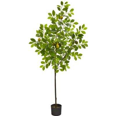 Lemon Tree in Pot Liner - Wayfair