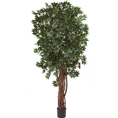 Floor Ficus Tree in Pot - Wayfair