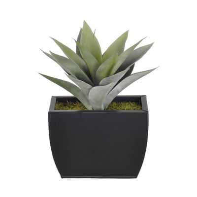 Artificial Frosted Green Succulent Desk Top Plant in Decorative Vase - Wayfair