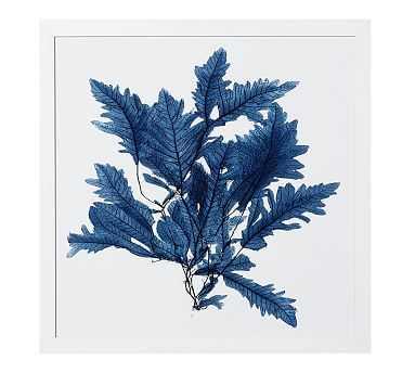 "Framed Coral Print #2, Indigo, 20 x 20"" - Pottery Barn"