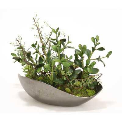 Succulents and Jade Plants Desk Top Plant - Wayfair