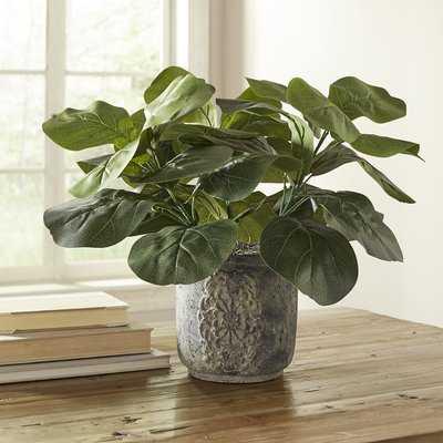 Potted Fiddle-Leaf Fig Desktop Plant - Wayfair