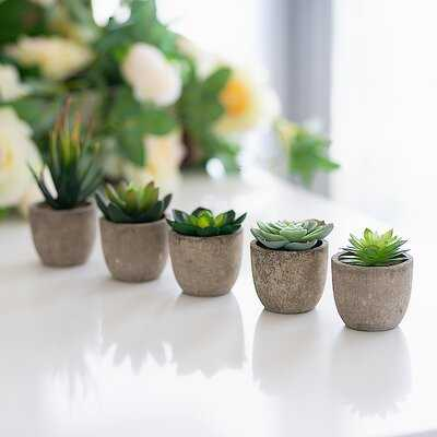 5 Piece Succulent Desktop Shelf Plants In Pot (Set Of 6) - Wayfair