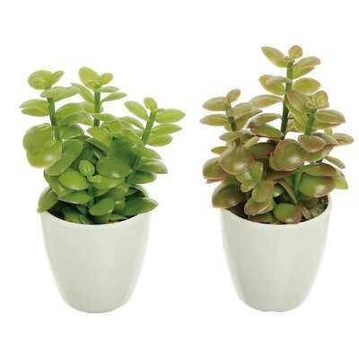 2 Piece Jade Plant Cactus Succulent in Pot Set - Wayfair