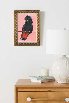 Red-Tailed Black Cockatoo Wall Art - Anthropologie