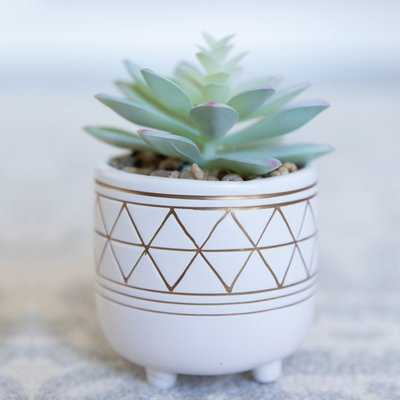 Gold Geo Hand Painted Legs Succulent Plant in Pot - Wayfair