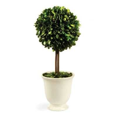 Boxwood Topiary in Pot - Birch Lane