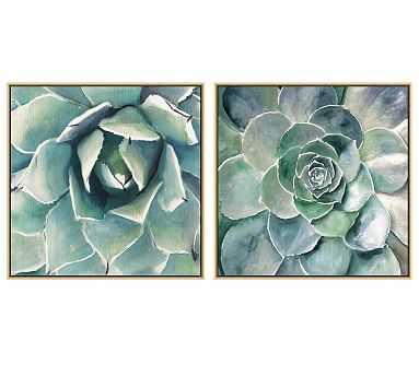 "Garden Succulent Canvas, 28 x 28"", Set of 2 - Pottery Barn"