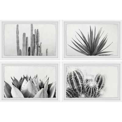 'Cactus Kinds Quadriptych' 4 Piece Framed Photographic Print Set - Wayfair