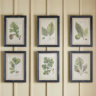 Deciduous - 6 Piece Picture Frame Print Set on Paper - Birch Lane