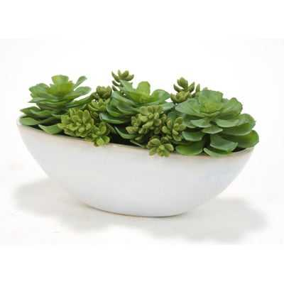 Succulents and Hen and Chickens Desk Top Plant in Planter - Wayfair