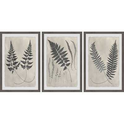'Vintage Fern Study II Triptych' 3 Piece Framed Graphic Art Print Set - Wayfair