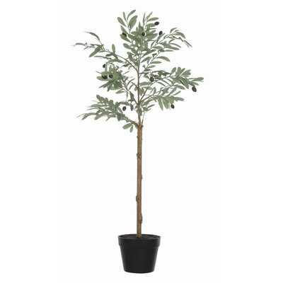 Olive Plant in Pot - Wayfair