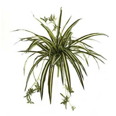 23 in. Spider Plant Bush (Set of 4) - Home Depot