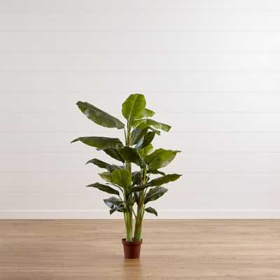 Banana Tree - Crate and Barrel