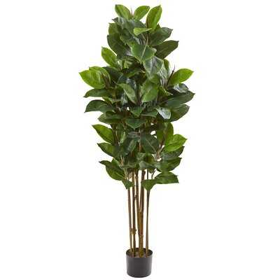 Rubber Leaf Tree in Pot Liner - Wayfair