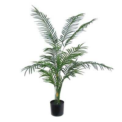 Bamboo Reed Palm Tree in Planter - Wayfair