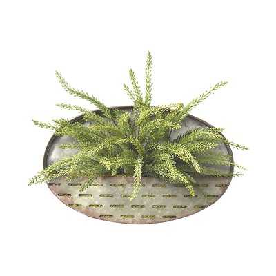 Heather Fern Hanging Plant - Wayfair