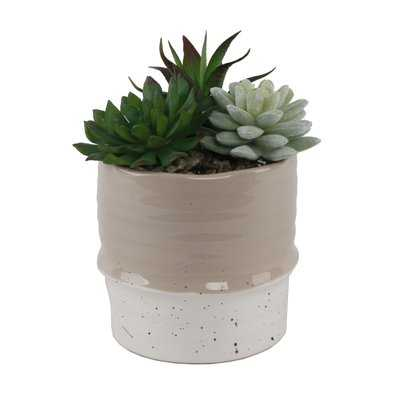 Succulent in Planter - Wayfair
