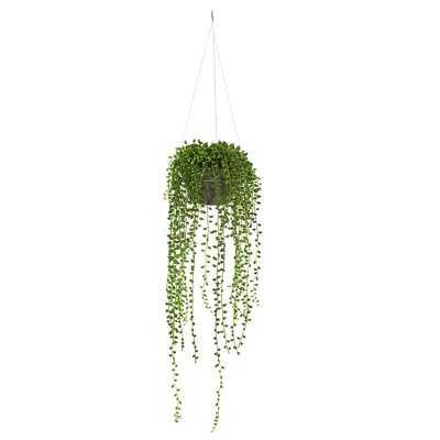 String of Pearl Hanging Foliage Plant in Basket - Wayfair