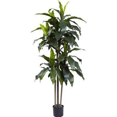 Dracaena Plant in Planter - AllModern