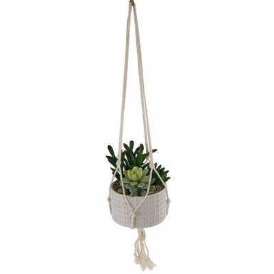 Ceramic Hanging Succulent Plant in Planter - Wayfair