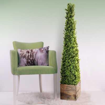 Spring Boxwood Topiary in Planter - Wayfair