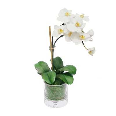 Faux Single Orchid in Glass Vase - Williams Sonoma