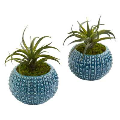 Nearly Natural Indoor Air Plant Artificial Succulent in Blue Vase (Set of 2) - Home Depot