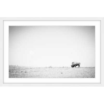 'Distant Grazing' Framed Photographic Print on Paper - AllModern
