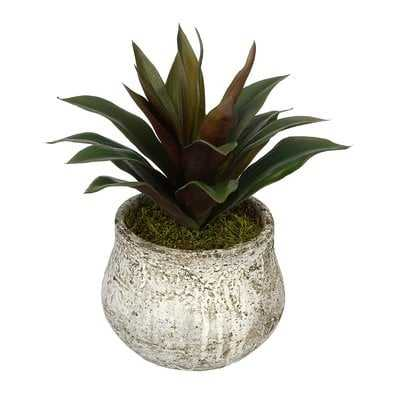 Artificial Succulent Desk Top Plant in Decorative Decorative Vase - Wayfair