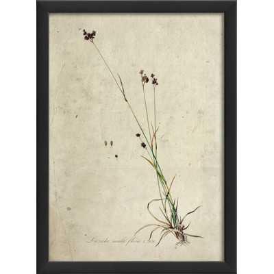 Botanical Framed Graphic Art Print - Wayfair