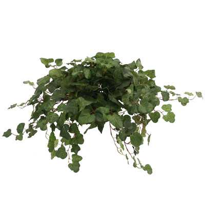 Topper with Silk Swedish Ivy Hanging Plant in Planter (Set of 2) - Wayfair