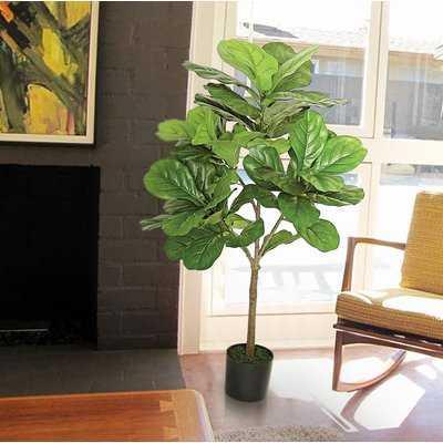 Large Leaf Fig Tall Floor Ficus Tree in Pot - Wayfair