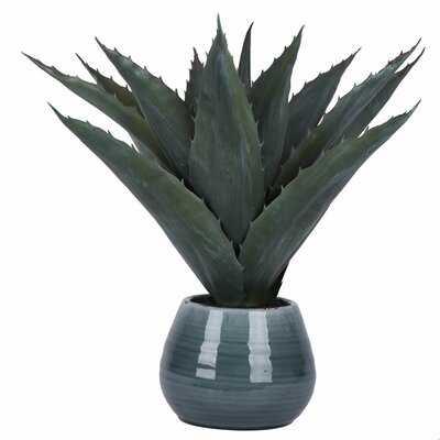 Succulent in Pot - Wayfair