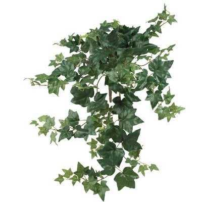 Puff Hanging Ivy Plant - Wayfair